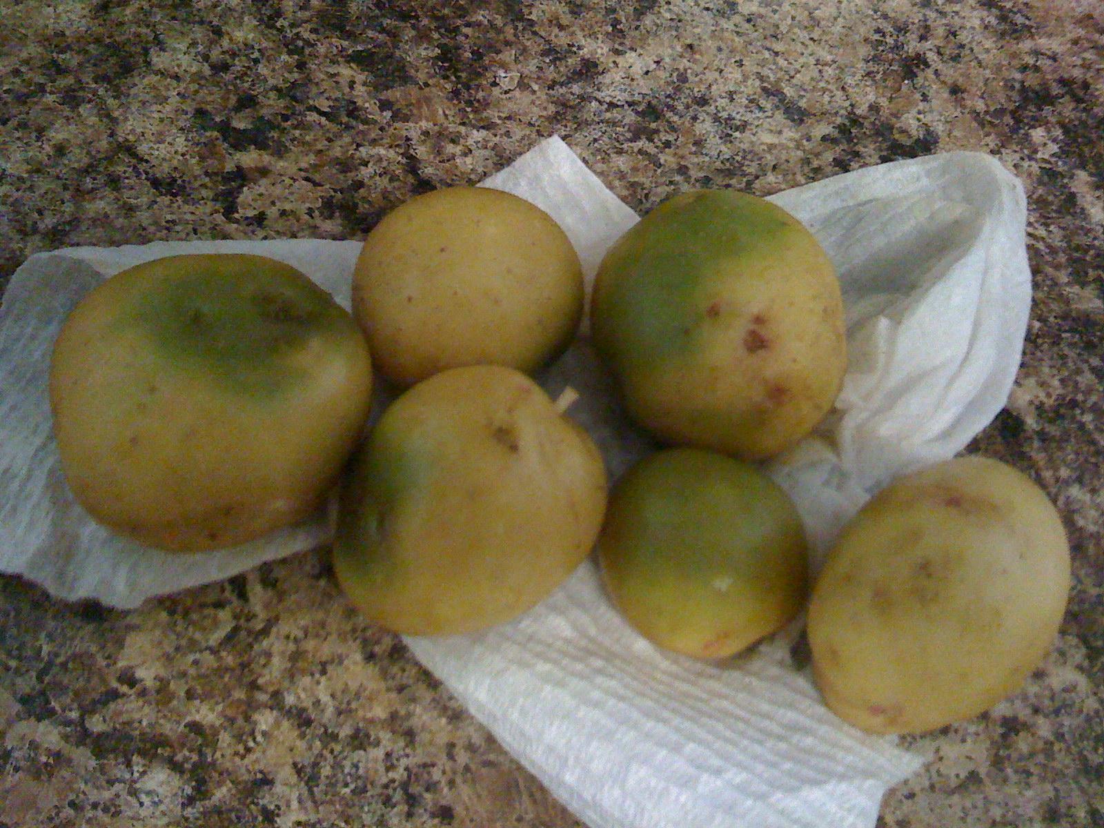 Rinsed Green Potatoes