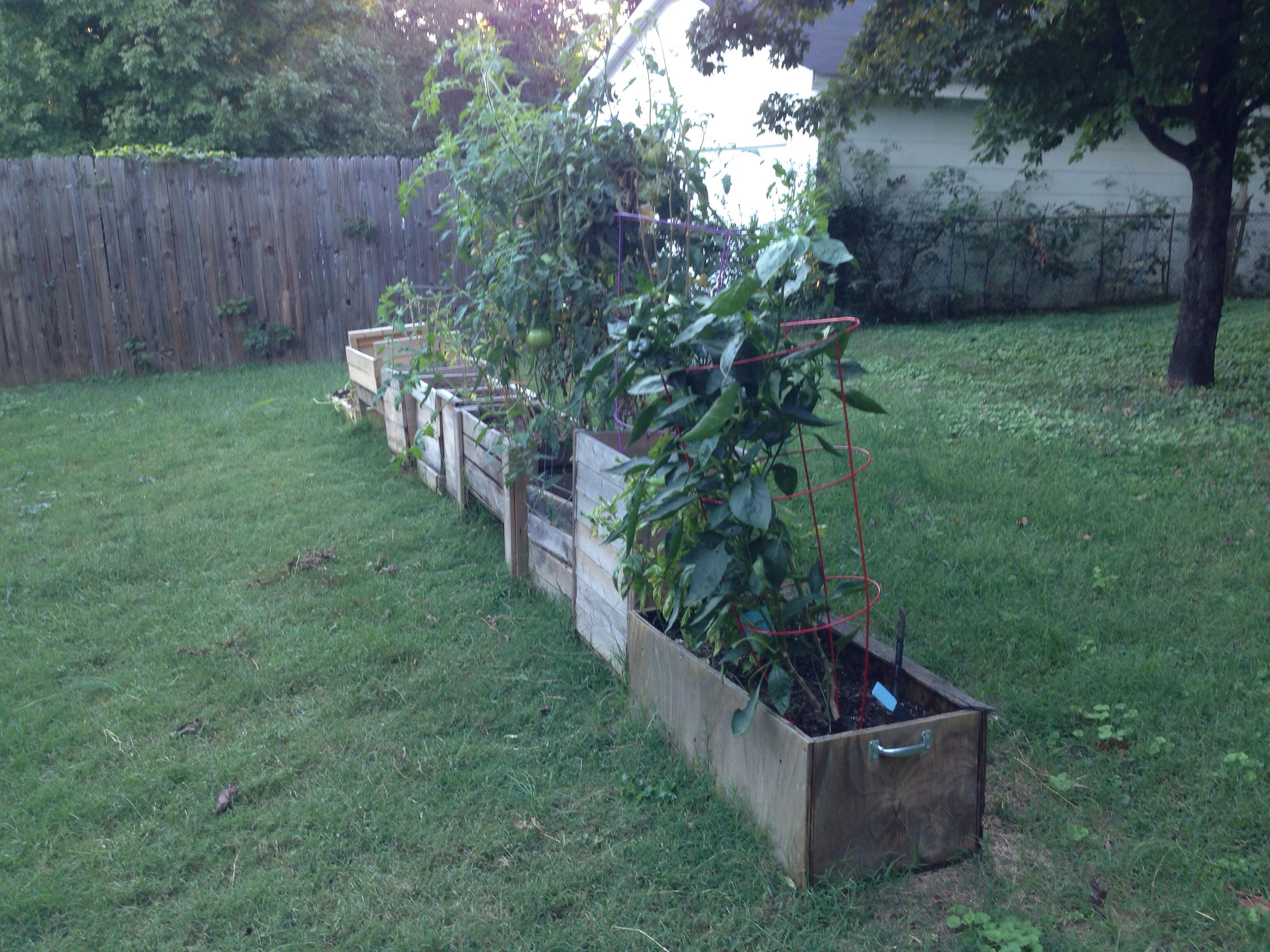 Garden Boxes - October 2013
